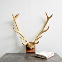 Loft design szarvas trófea Hirsch-Trophäe deer trophy agancs antler Geweih dekoráció dekoration decoration